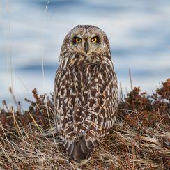 Owl 180 Turn