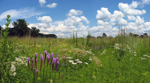 Figure 6: A beautiful prairie in summer bloom