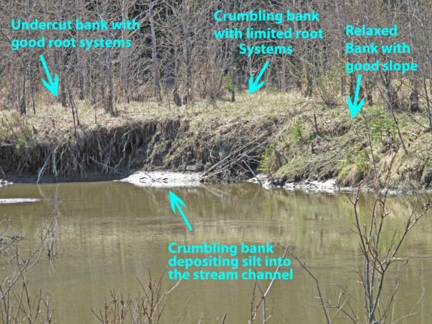 Figure 2 Example of different types of bank erosion.