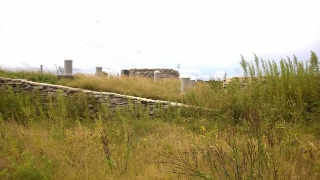 Figure 4: NGRREC Green Roof