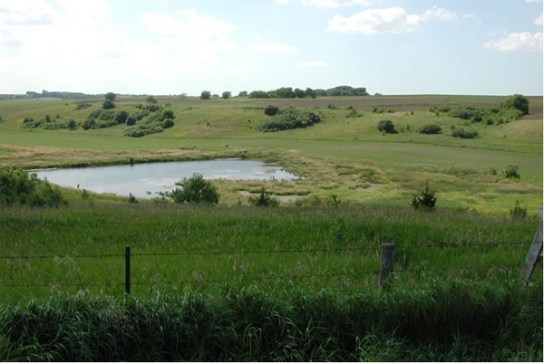 Figure 6 Constructed wetland within an agriculture system.